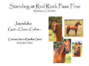 standing_at___red_rock_paso_fino.jpg